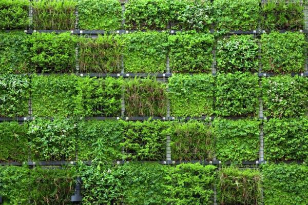 Giardino verticale fai da te - Prato verticale per interni ...