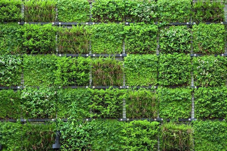 Foto giardino verticale fai da te - Giardino verticale fai da te ...