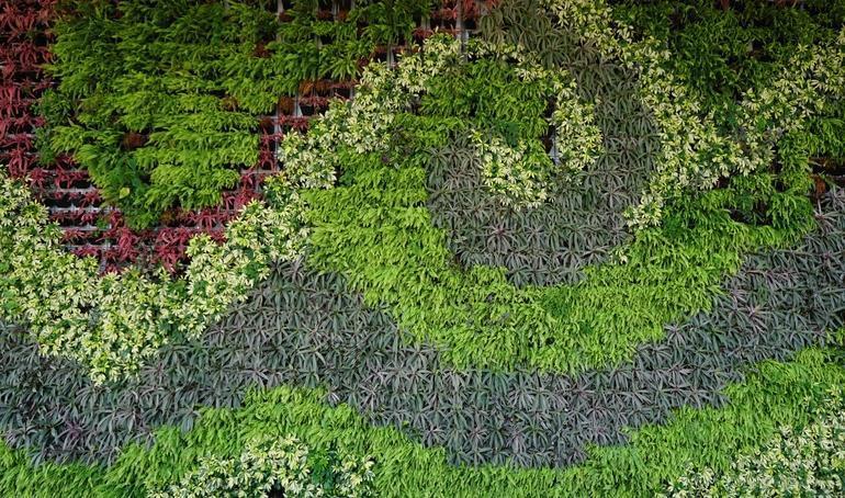 Giardino verticale: composizione decorativa