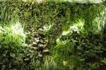 Piante tropicali BioWall di Furbish