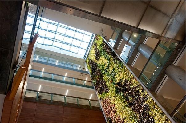 Estensione verticale parete BioWall di NEDLAW Living Wall