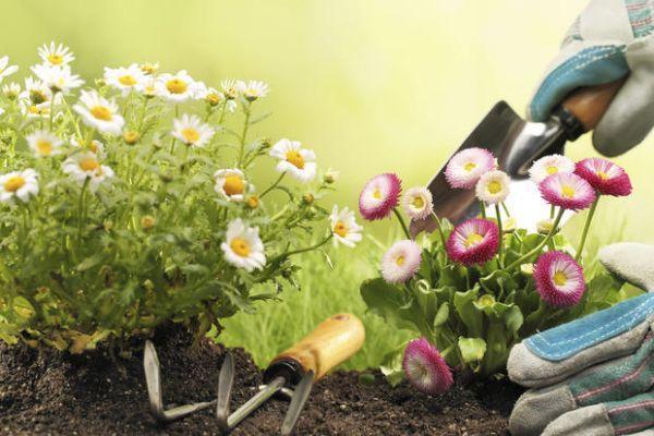 Manutenzione degli attrezzi per il giardinaggio
