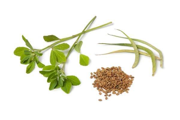 Foglie, baccelli e semi di Fieno Greco