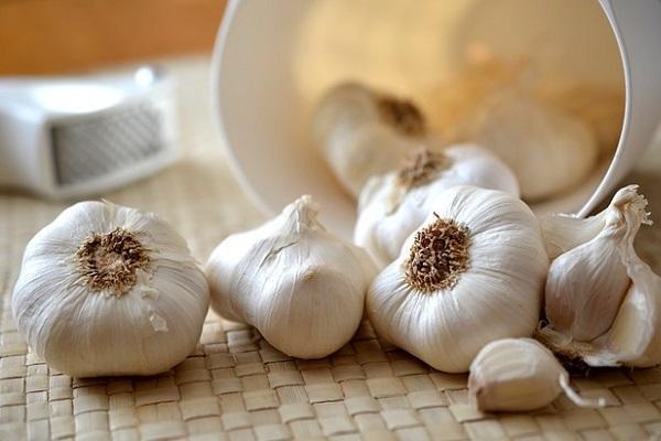 Orto autunnale: teste di aglio
