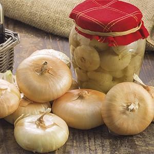 Cipolla borettana tipica coltura autunnale
