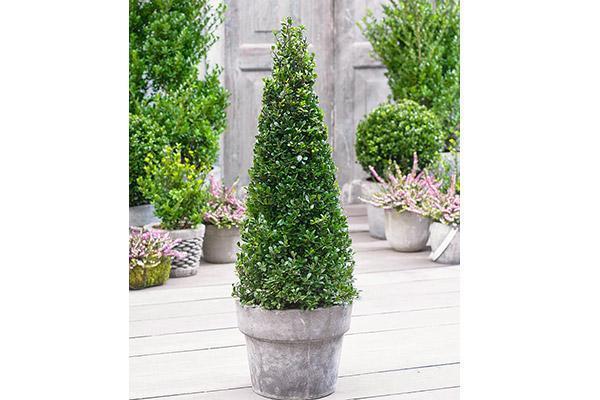 Piante autunnali da giardino - Piante decorative da giardino ...