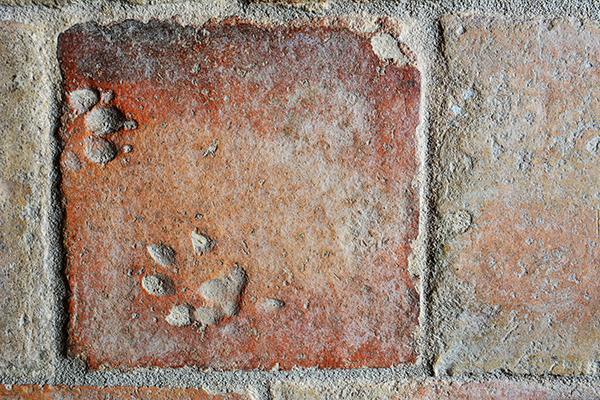 Antica piastrella in cotto con impronte di cane