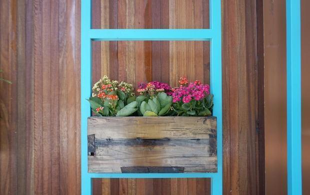 Casa profumata: piante da interno, Begonia