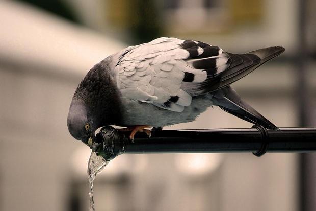 Sistemi antivolatili: piccioni