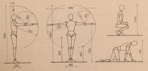 Progettare gli ambienti attraverso le misure antropometriche