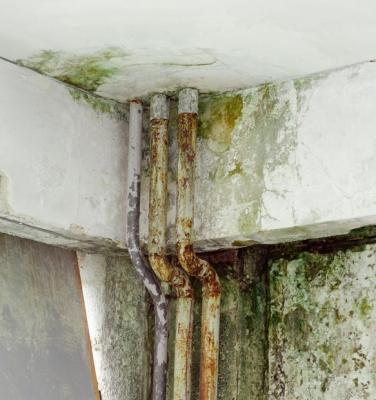 Formazione di muffa sulle pareti a causa di infiltrazione d'acqua
