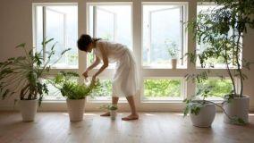 Cura delle piante da interno durante la stagione invernale