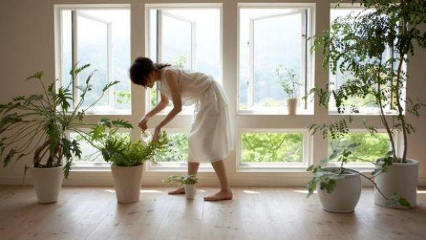 Piante da appartamento: queste le cure per l'inverno