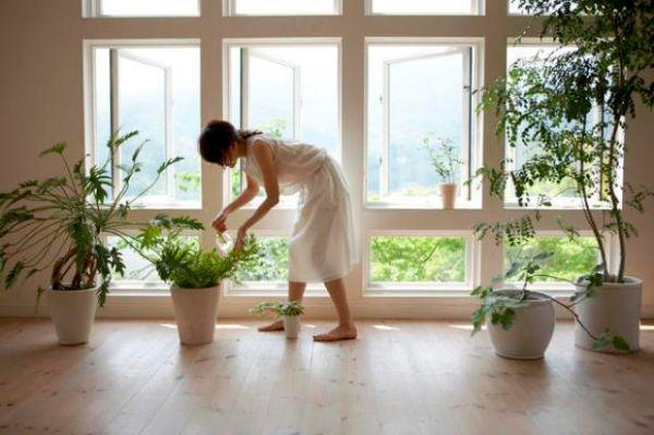 Cure per le piante da appartamento in inverno