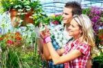 Cura del verde in casa
