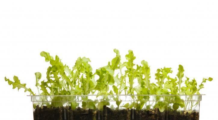 Cura delle piante da appartamento in inverno