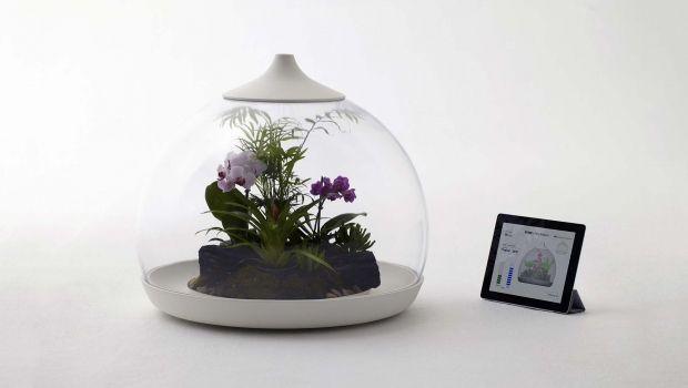 Serre digitali domestiche per coltivare le piante tramite app!