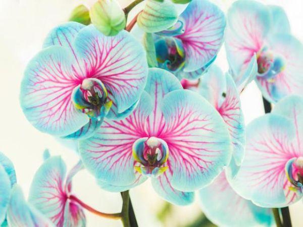 Coltivazione di piante tropicali nella serra digitale domestica