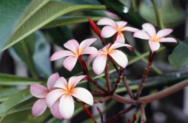 Coltivazione di piante fiorite anche tropicali in serra domestica