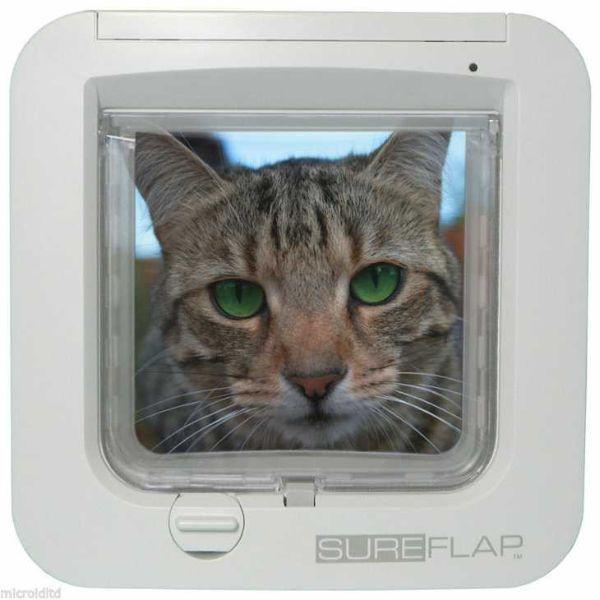 Accessori per cani e gatti: gattaiola con microchip su Ebay