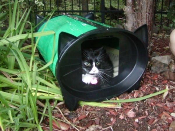 Cuccia gatto da esterno Katkabin