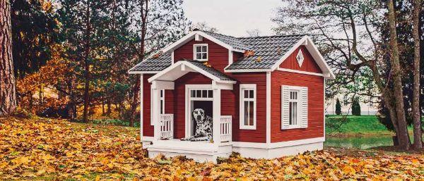 Smart Dog House per cani