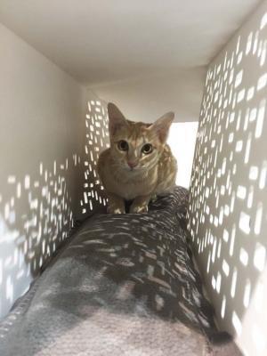 Cuccia gatti Tunnel di Brandodesign.it