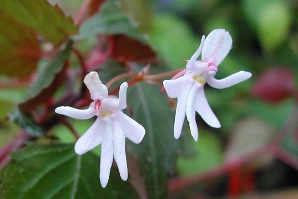 Piante Strane Da Giardino : Piante rare cura e coltivazione in casa giardino