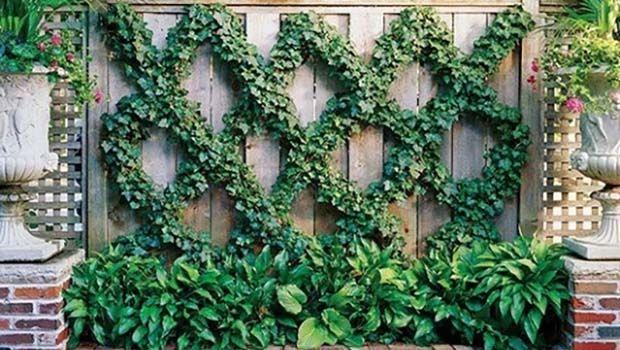 Piante Per Recinzioni Giardino.Edera Consigli Pratici Per Una Pianta Rigogliosa