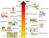 Inquinamento acustico:Tavola-illustrata-rumori-Arpa-Lombardia