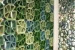 Frangisole incotto parete di Ceipo