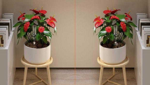 Le piante in vaso: salute e bellezza con una perfetta innaffiatura