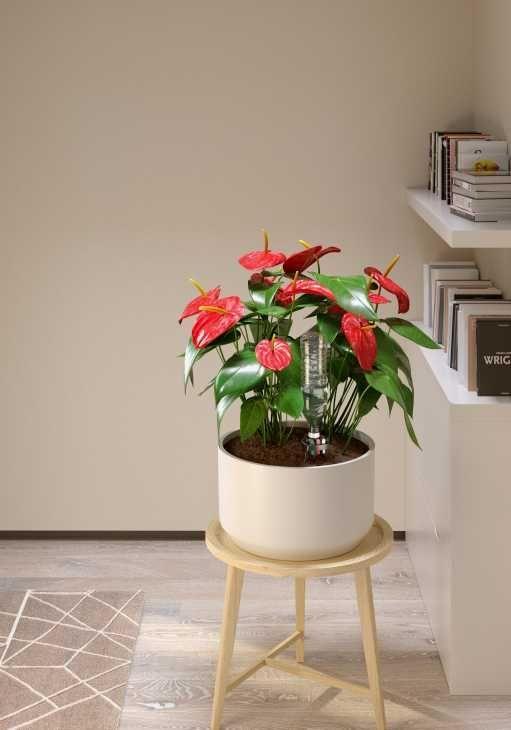 Innaffiare le piante in vaso con Idris di Claber