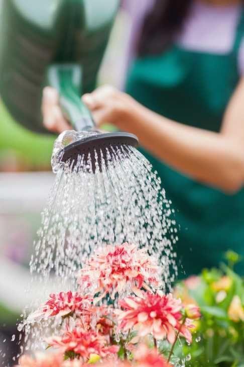 Irrigazione balcone, le piante in vaso
