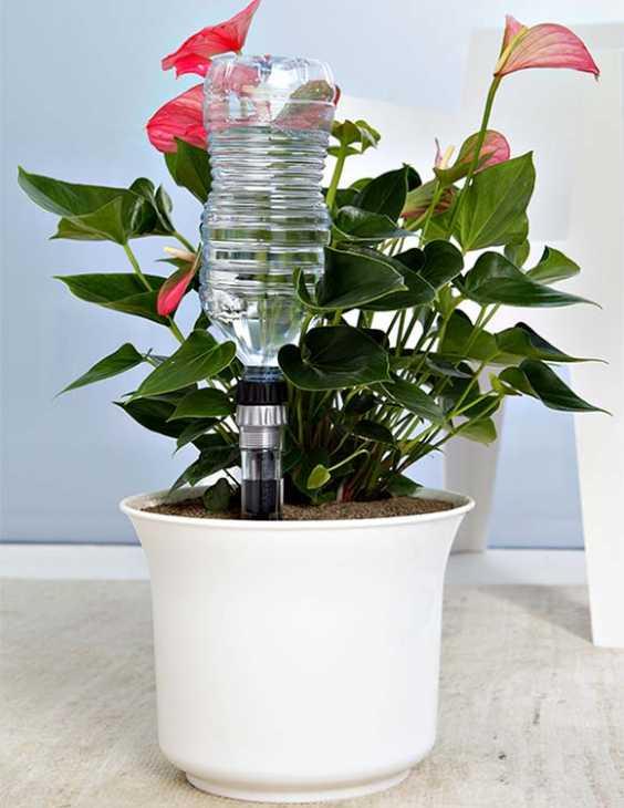 Innaffiare le piante con una bottiglia di plastica