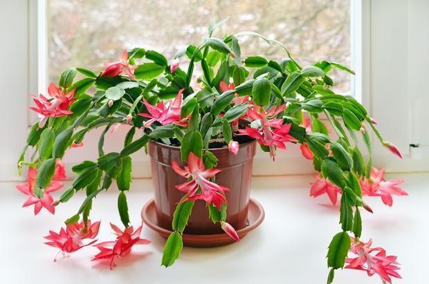 Innaffiatura piante in vaso