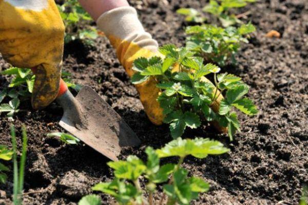 Come coltivare l'orto