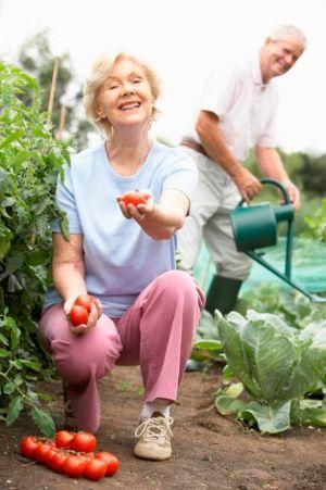 Coltivazione ortaggi nell'orto