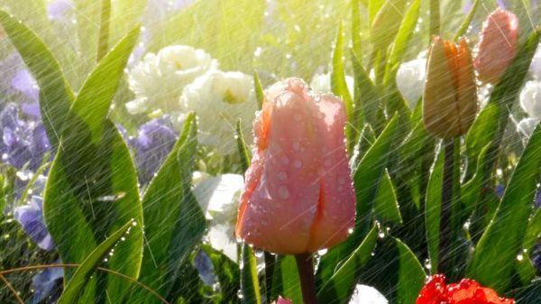 Irrigazione fai da te piante e fiori