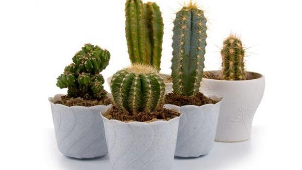 Il modo migliore per curare le piante grasse da appartamento