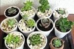 Mix di piante grasse in vaso da Pinterest