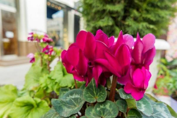 Come irrigare le piante in balcone