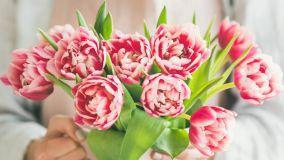 Coltivazione e cura dei tulipani