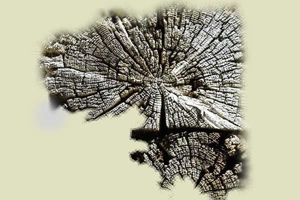 Parti in legno ammalorate