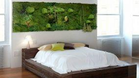 Coltivare il muschio: tante varianti per una casa più verde