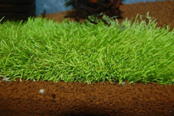 Muschio di Giava di Agri Pet Garden