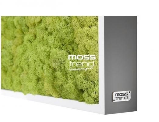 Quadro muschio licheni Moss Trend