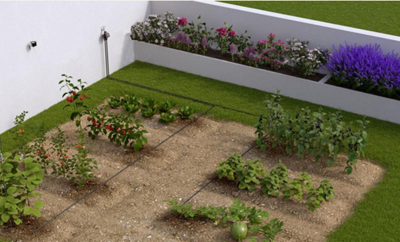 Orto domestico: cosa coltivare e come irrigarlo