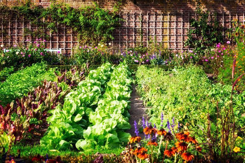 Orto in terrazzo domestico: cosa coltivare