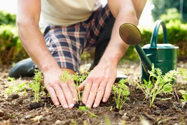 Lavorare l'orto domestico